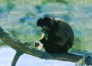 "New artwork for sale! - "" Capuchin Monkey Capuchins Primate  by PixBreak Art "" - http://ift.tt/2mDI8vz"