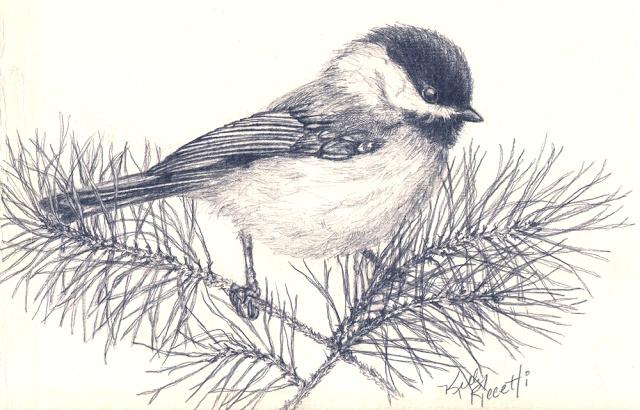 A pencil sketch of a Carolina Chickadee (by Kelly Riccetti)