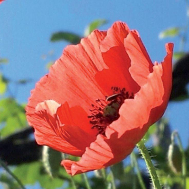 Les 117 meilleures images du tableau plantes m dicinales sur pinterest m decine naturelle - Liste des plantes medicinales ...