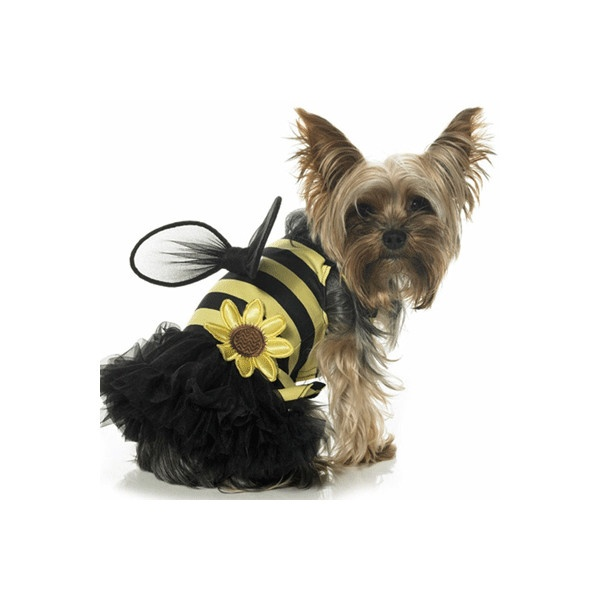 Pet Halloween Costumes - Cute Dog and Cat Halloween Costume Ideas -... ❤ liked on Polyvore