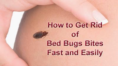 Best 25 Bed Bugs Ideas On Pinterest Bed Bug Spray Bed