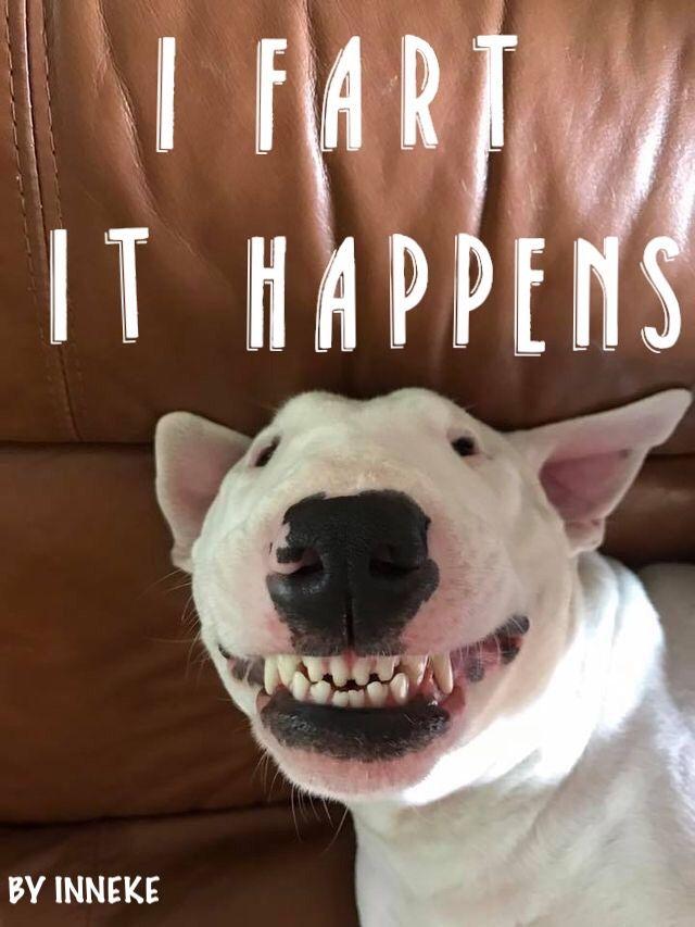 Truth............. #inneke | Bull Terrier | Bull terrier ...