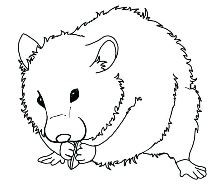 Hamster Coloring Pages - Best Coloring Pages For Kids | Animal coloring pages, Halloween ...