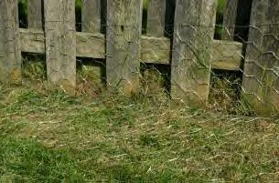 chicken wire used to dog escape proof a fence.  Maybe pile rock over bottom part to help keep it secured.