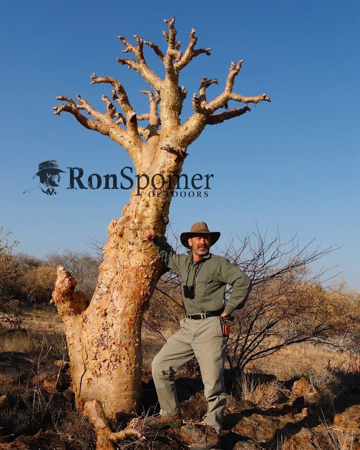 Remarkably weird trees in Namibia. This is a Moringa. It's not dead. Neither is the guy standing by it. #ronspomeroutdoors #Namibia #tree #moringa #hunting #africa #weird #whywehunt