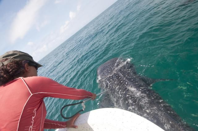 What is the salary of a marine biologist? Learn about a marine biologist's job and salary range and decide whether you should become a marine biologist.