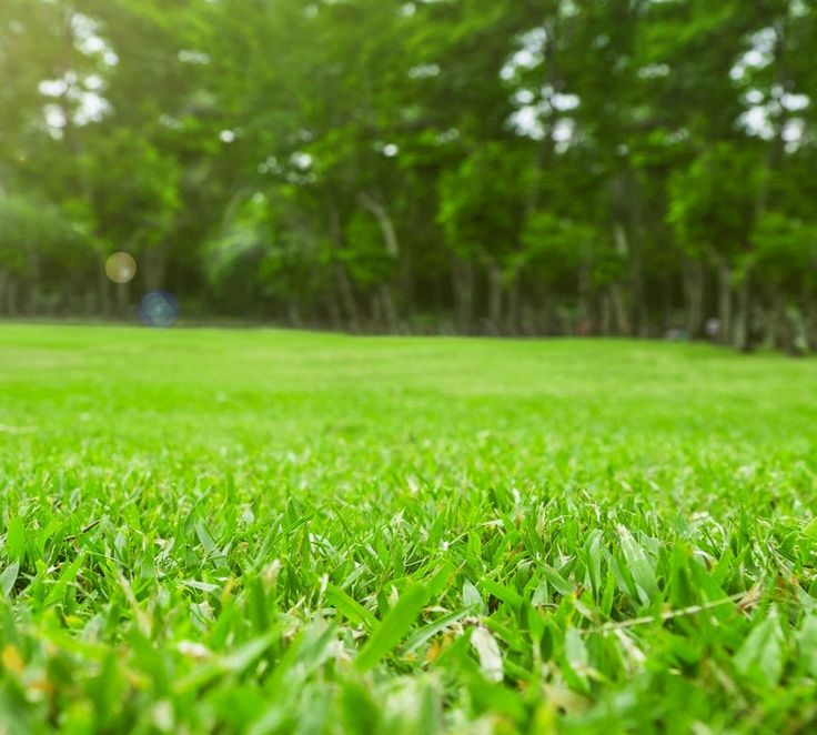 how often to fertilize lawn in florida