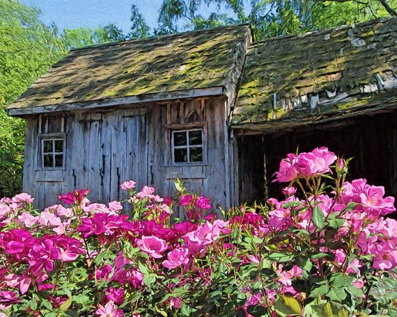 Pink Roses Blooming at the Old Garden Shed by JoeParskeyGallery