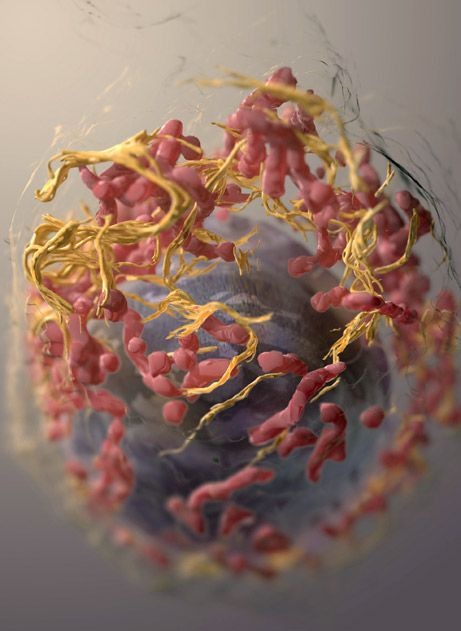 """3D Imaging of Mammalian Cells with Ion-Abrasion Scanning Electron Microscopy"" 