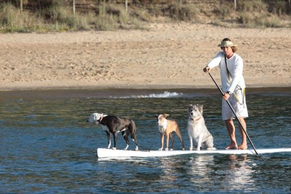 How to take your pets on a Queensland holiday #howto #pets #travel
