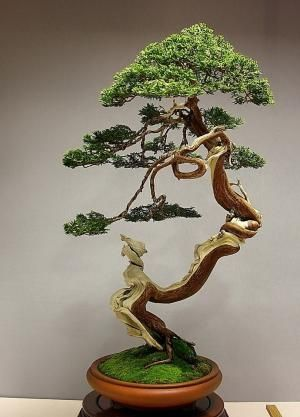 Bonsai Tree by catrulz