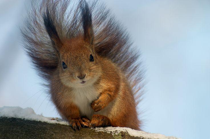 Eichhörnchen – Flink, scheu und vergesslich - Gartenzauber