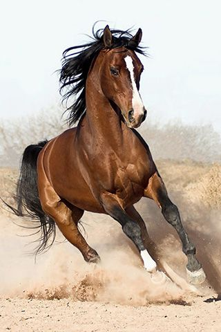 Galloping brown horse, that power.  I want him for Christmas!!!