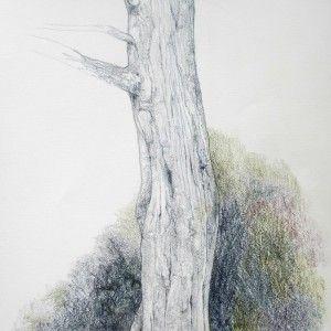 Cedar Tree, Graphitint