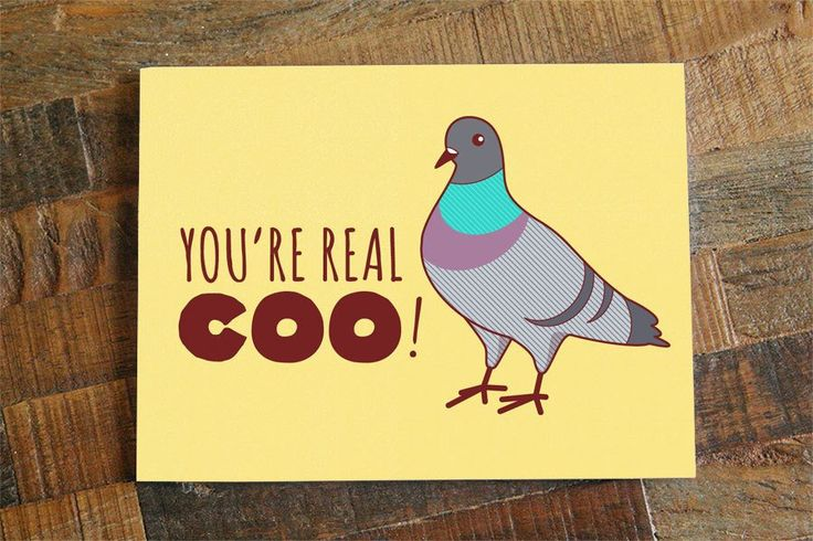 """FREE SHIPPING ON US ORDERS! """"You're Real Coo"""" Perfect for special occasions, this cute pigeon pun card lets your recipient know they're looking harp! Awesome for anniversaries, birthdays, valentines d"""