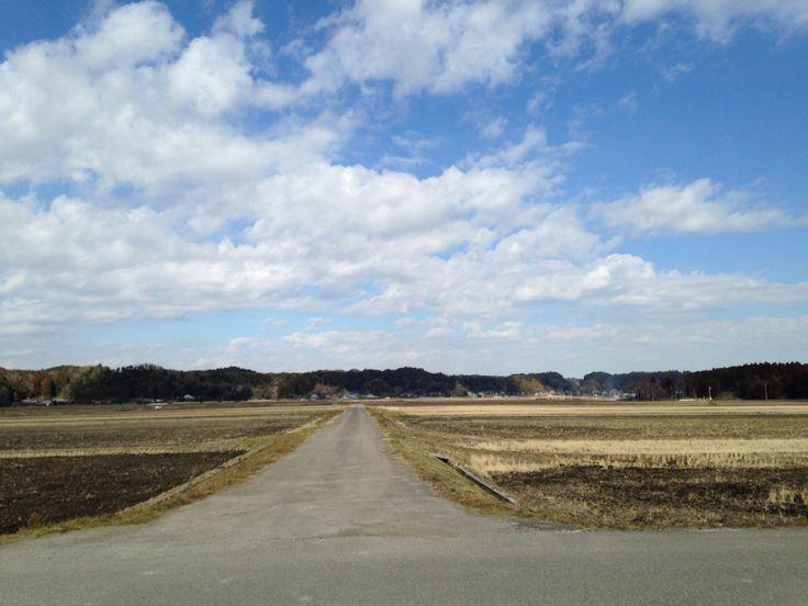Rice paddy at Isumi