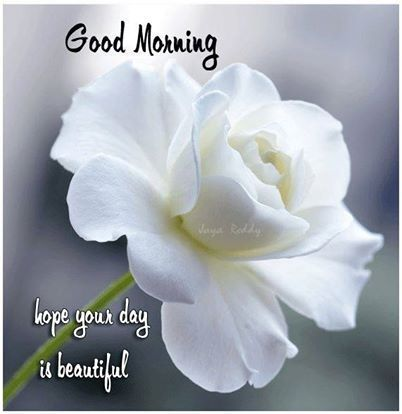 Good Morning Pictures With Flowers - fresh flower pictures