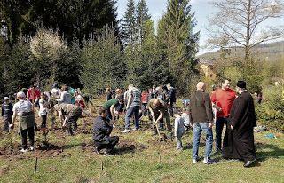 Bacăul economic: Campanie de împădurire marca Lions Clubs la Mănăst...