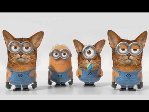 Cat minion version of Banana song.