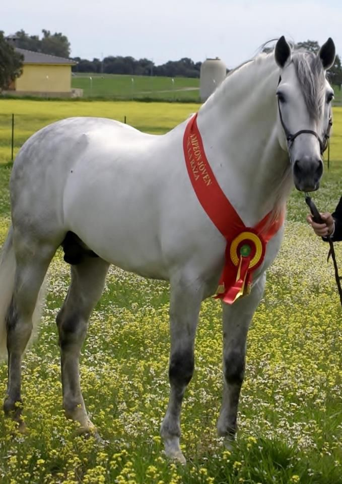 One of the most gorgeous horses I have ever seen