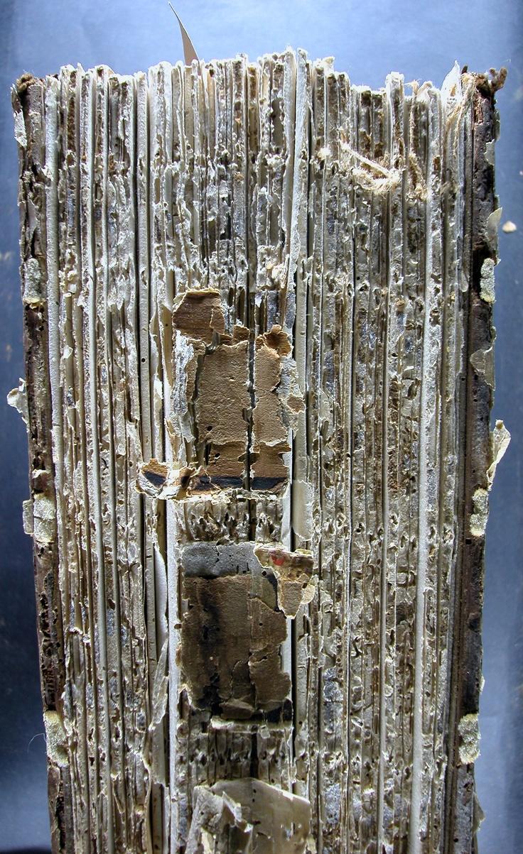 Proposta de restauració: Neteja, consolidació, desacidificació i reintegració de perforacions de corcs. Nova enquadernació amb pergamí.