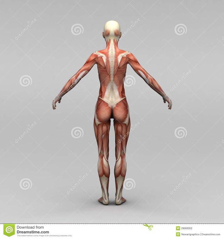 60 best Anatomy images on Pinterest   Human anatomy, Human body ...