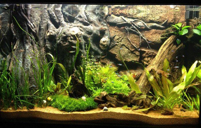 diy planted aquarium background