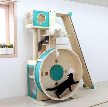 jeux pour les chats Plus