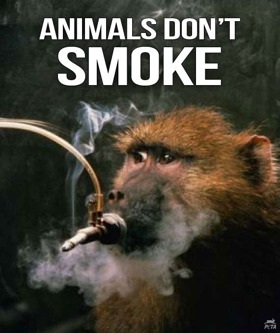 (via PETA (People for the Ethical Treatment of Animals) on Facebook)