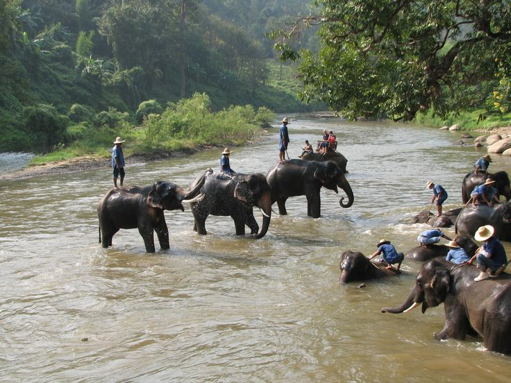 what to do in chiang mai thailand | What To Do In Chiang Mai| Things To Do In Chiang Mai | Thailand Travel ...