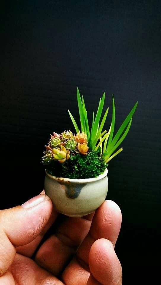 Pin von sven b auf kusamono pinterest pflanzen for Japanische kampffische
