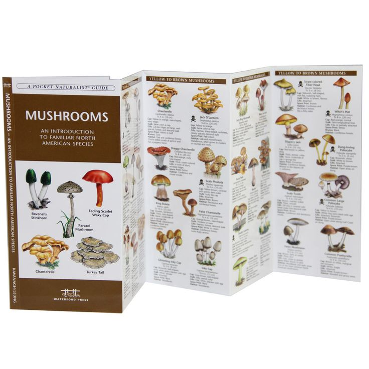 Edible Wild Mushroom Identification Guide | Mushroom Guide To North America | RailRiders