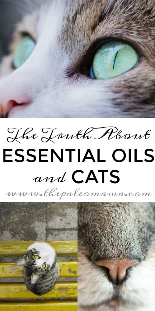 The Truth About Essential Oils and Cats