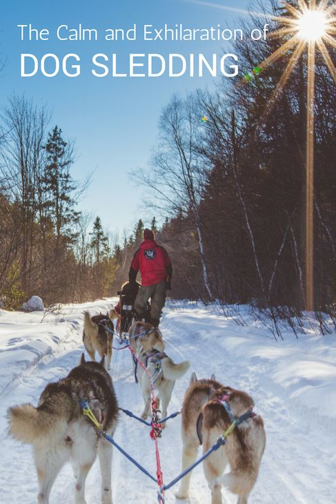 Dog sledding with Winterdance Dogsled Tours in Ontario, Canada.