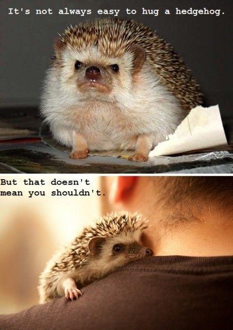 It's not always easy to hug a hedgehog...: Stuff, Pet, Funnies, Adorable, Things, Hedges Hog, Hedgehogs Hug, Hedghog, Animal