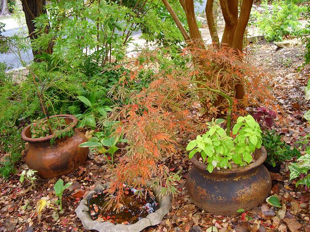 Potted acers turn color in my little woodland glade by pawightm patricia via flickr - My little jardin ...