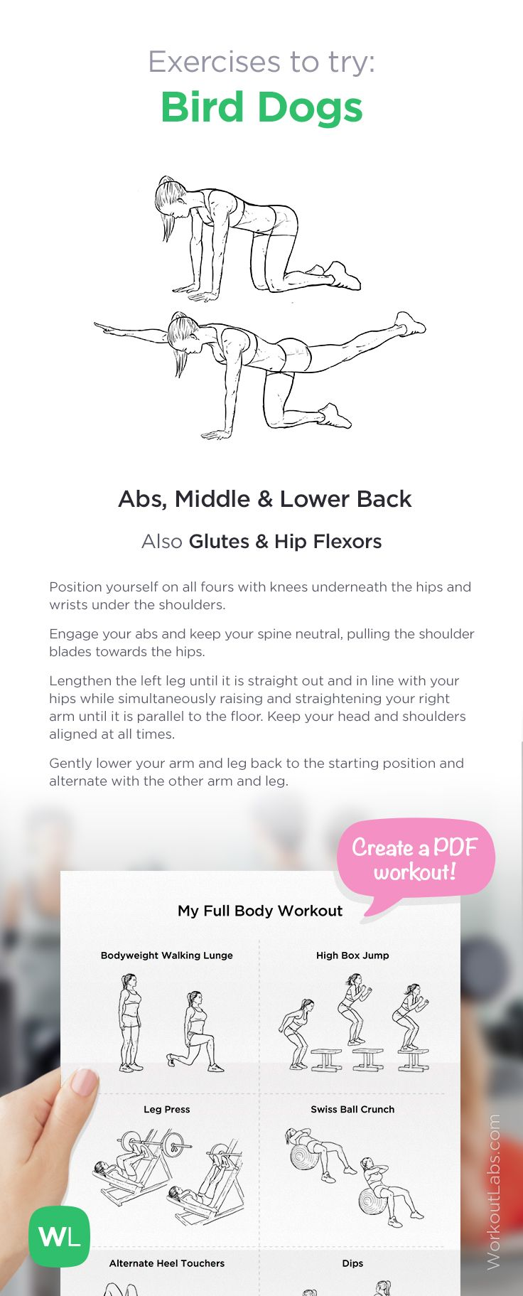 Exercise to try: Bird Dogs | Add it to your custom printable workout at http://WorkoutLabs.com!