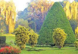 Botanical garden in srilanka.contact us for more information.susantha2803@gmail.com