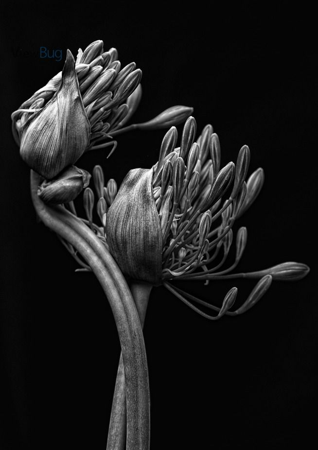 Winner of the black and white flowers photo contest by denglish