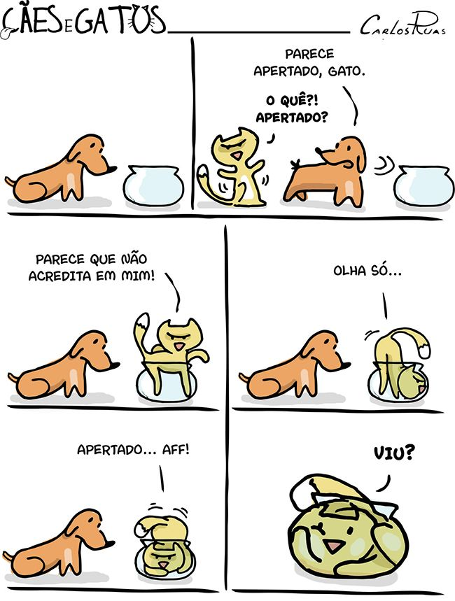 Cães e Gatos – Uma questão de perspectiva