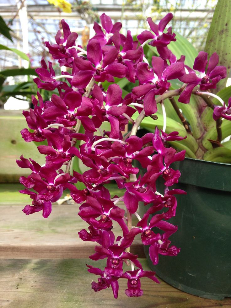 Andy's orchids coupon