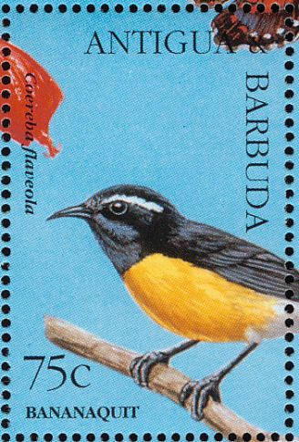 Bananaquit stamps - mainly images - gallery format
