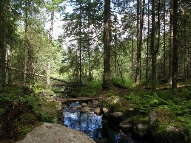 Evon retkeilyalue on yksi Etelä-Suomen suurimmista retkeilyalueista. Lukekaa lisää evosta : http://www.luontoon.fi/Retkikohteet/retkeilyalueet/evo/Sivut/Default.aspx ! :)