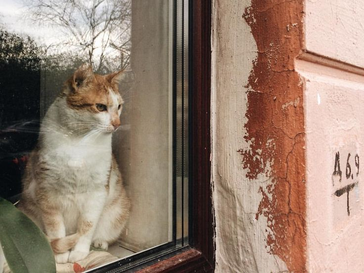 112 отметок «Нравится», 2 комментариев — margarita (@ne_smotrite) в Instagram: «в этом окне живет много котиков 😊»