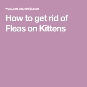best 25 killing fleas ideas on pinterest flea treatment cats home remedies for fleas and. Black Bedroom Furniture Sets. Home Design Ideas