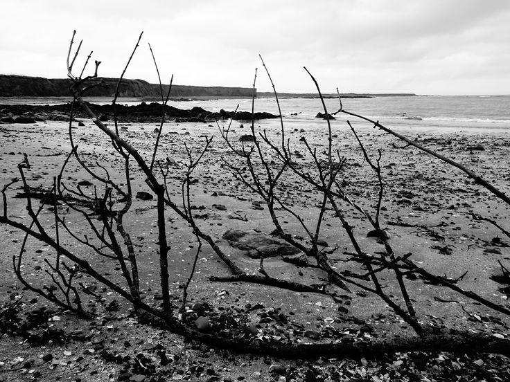 A branch of flotsam
