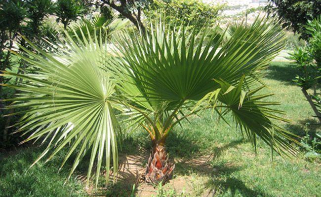 Plantes Graines Et Bulbes Articles Pour Jardin Et Terrasse