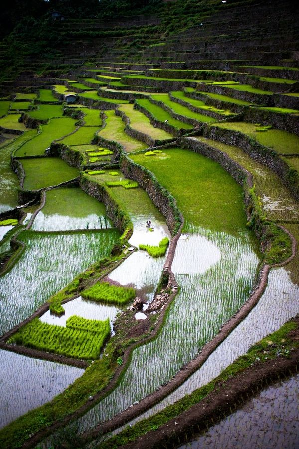Banaue Rice Terraces/Musuan Peak, Ifugao Province, Philippines