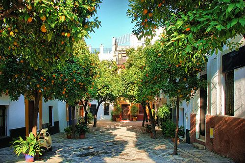 If that lottery win happens I'd spend a lot of time here. Barrio de Santa Cruz, Seville