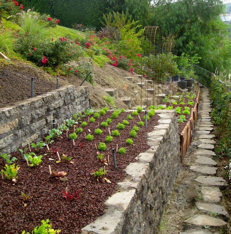 19 best Garden Terraced Veggies images on Pinterest Hillside